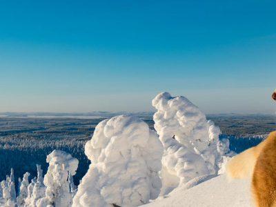 3515513372544-finlandia-kuusamo-capodanno-artico-1.jpg